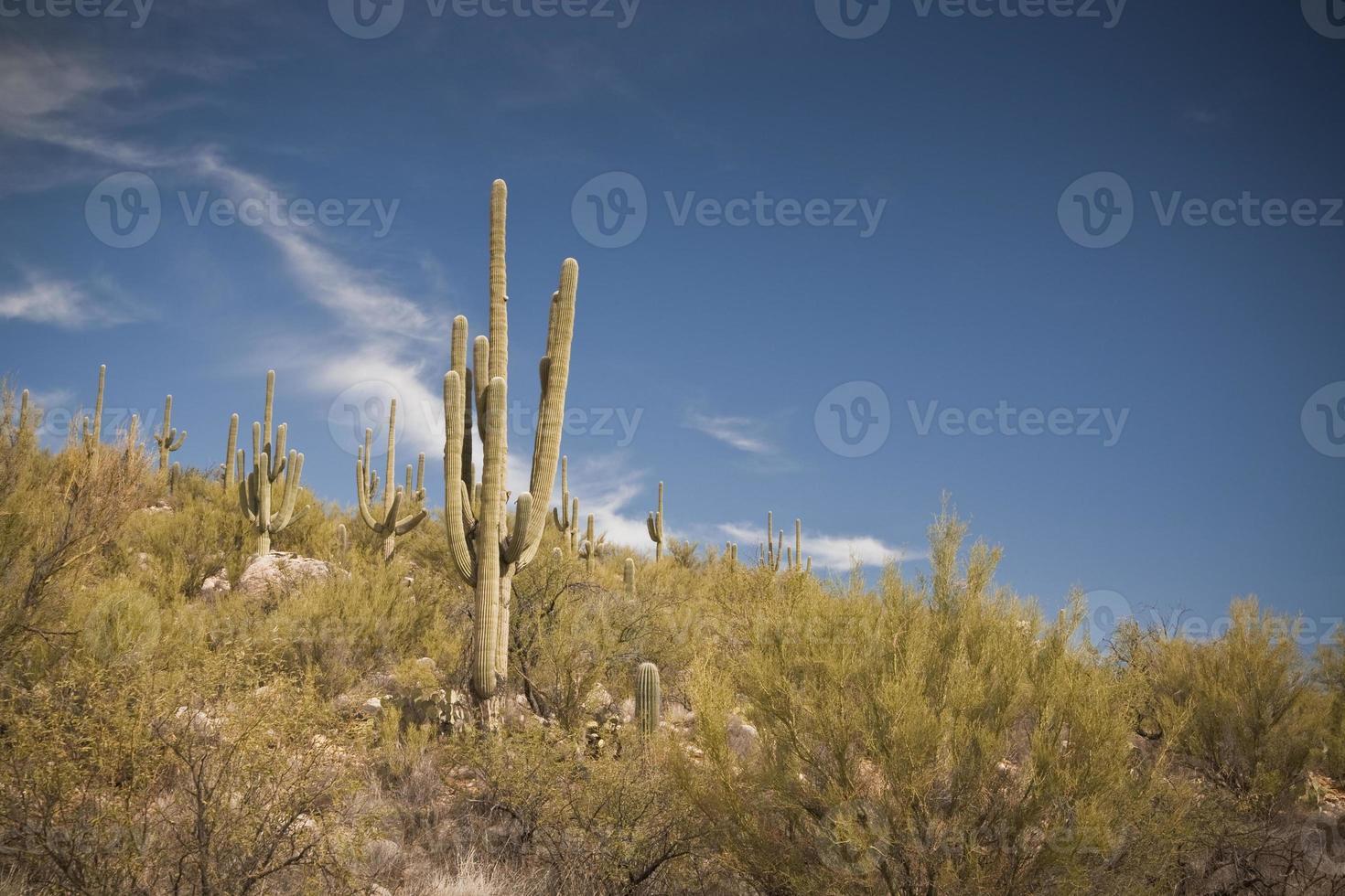 Wüstenlandschaft - 1 Kaktus mit Bergen foto