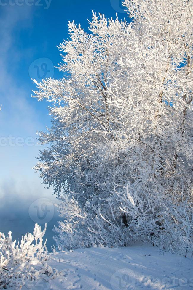 Fluss Winter foto