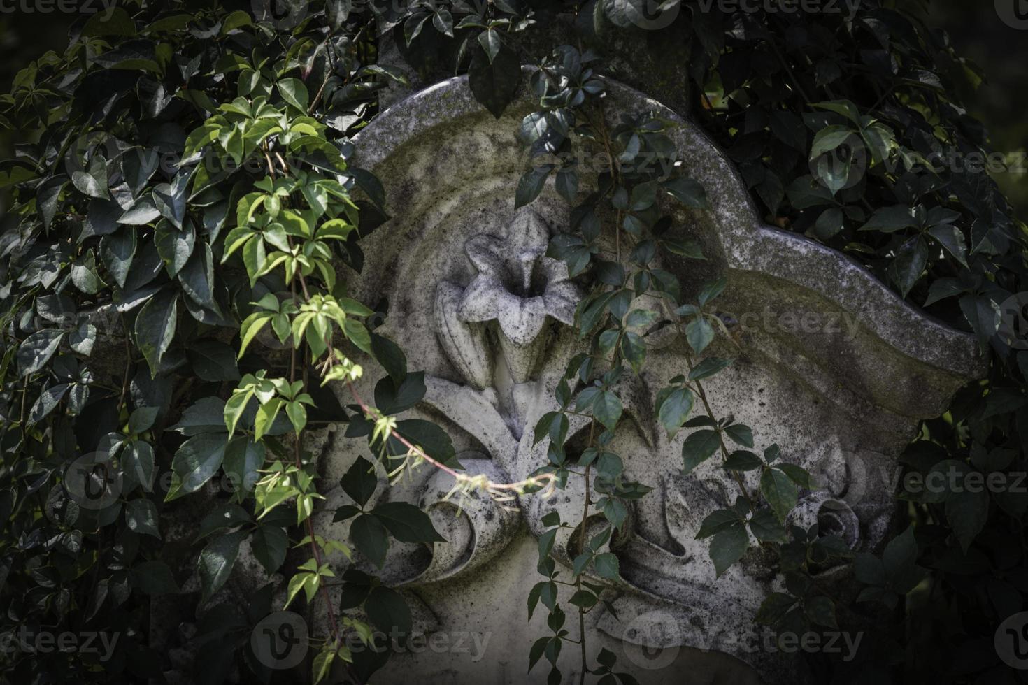 Reben auf Grabstein foto