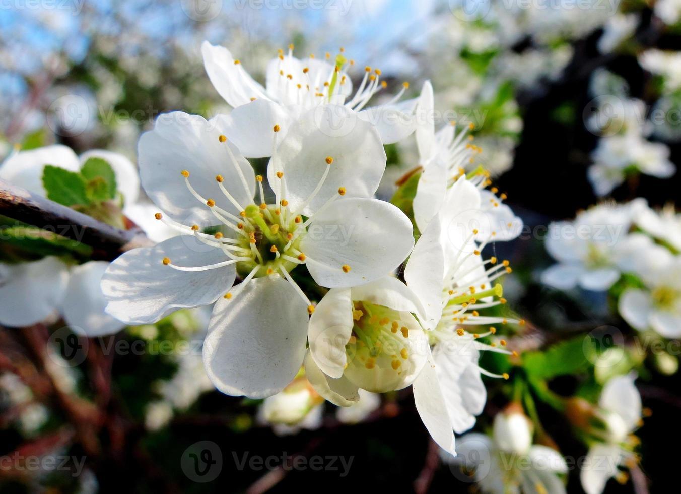Frühlingsetüden foto