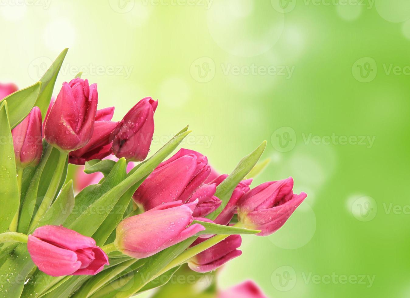 Frühlingshintergrund foto