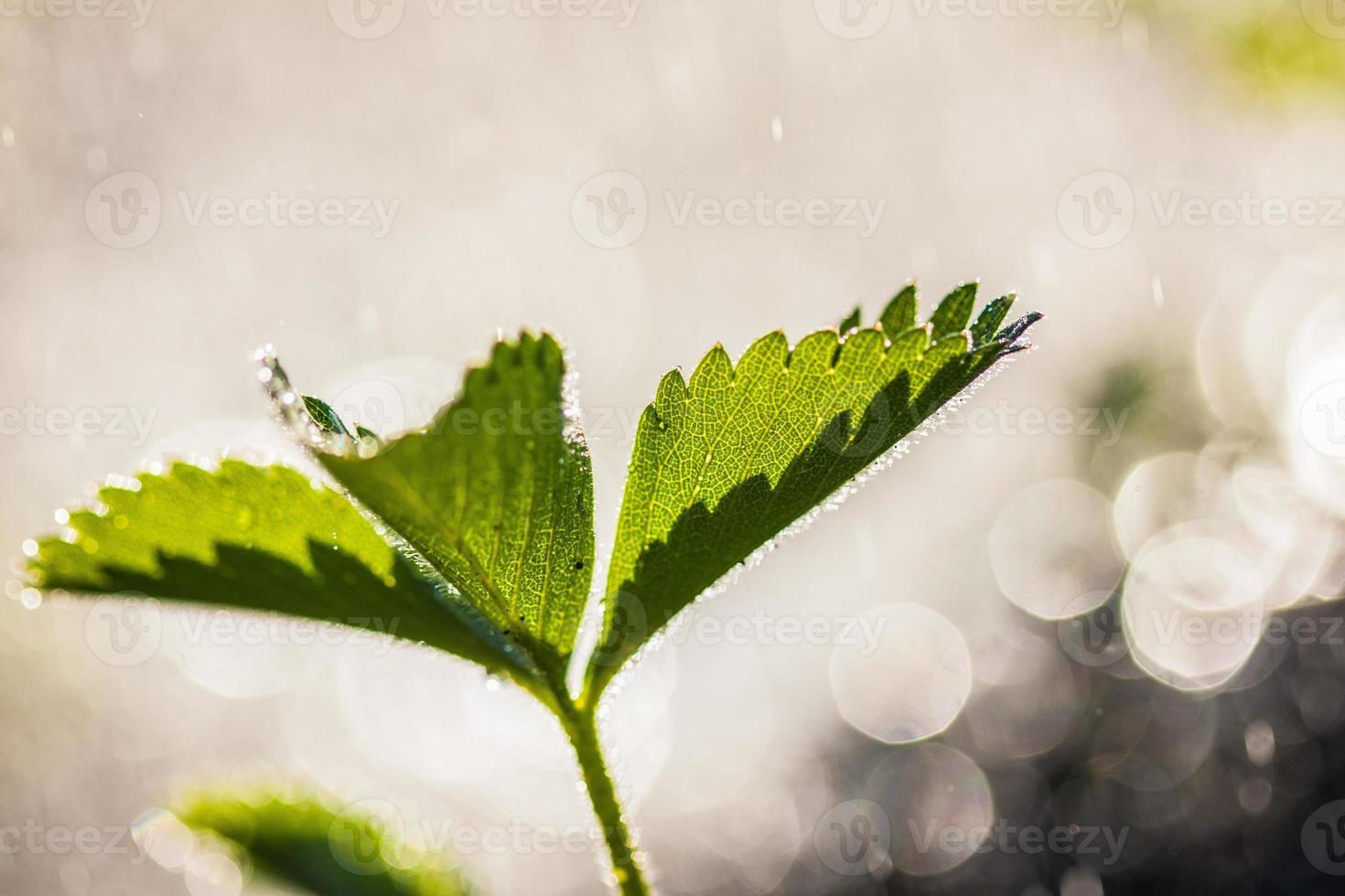 Frühlingspflanzen foto