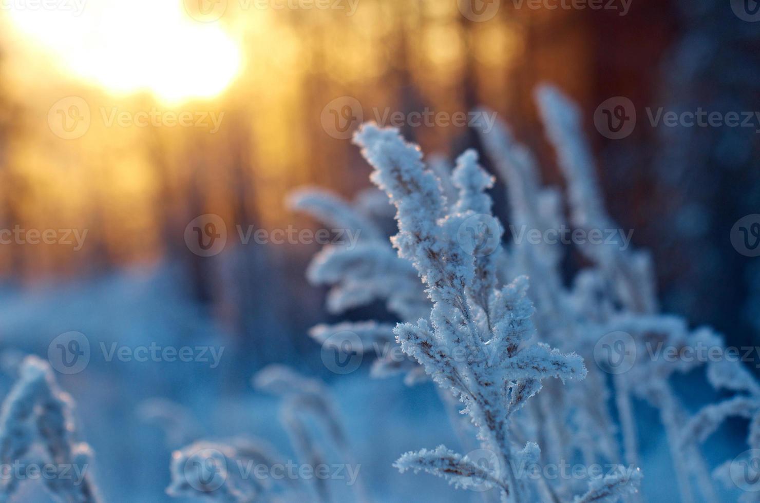 Winterszene foto