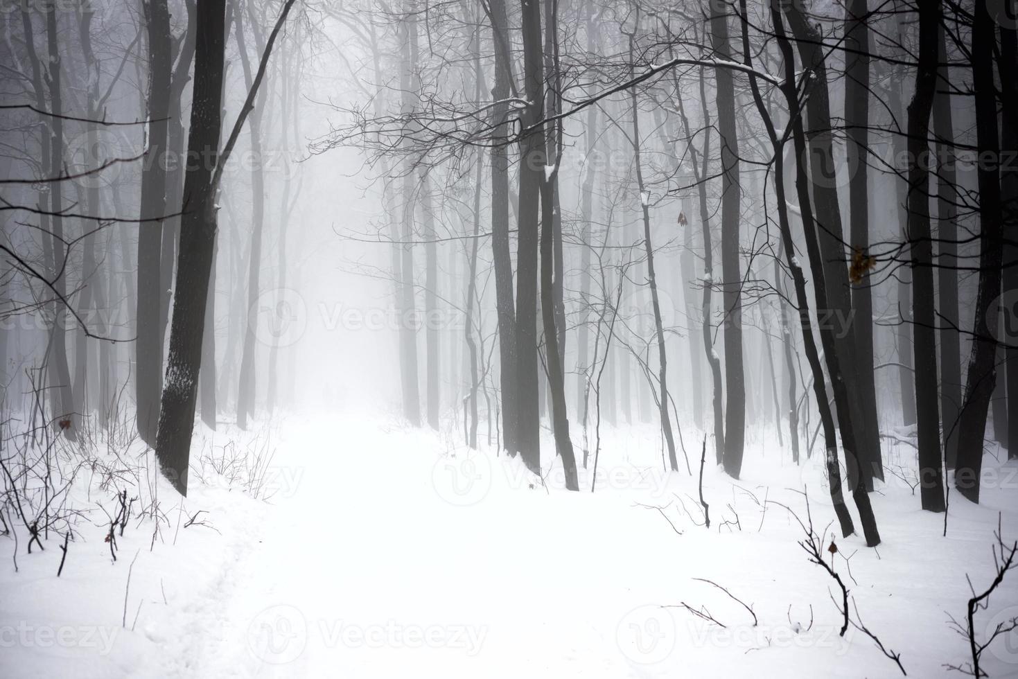 Winter nebligen Wald foto