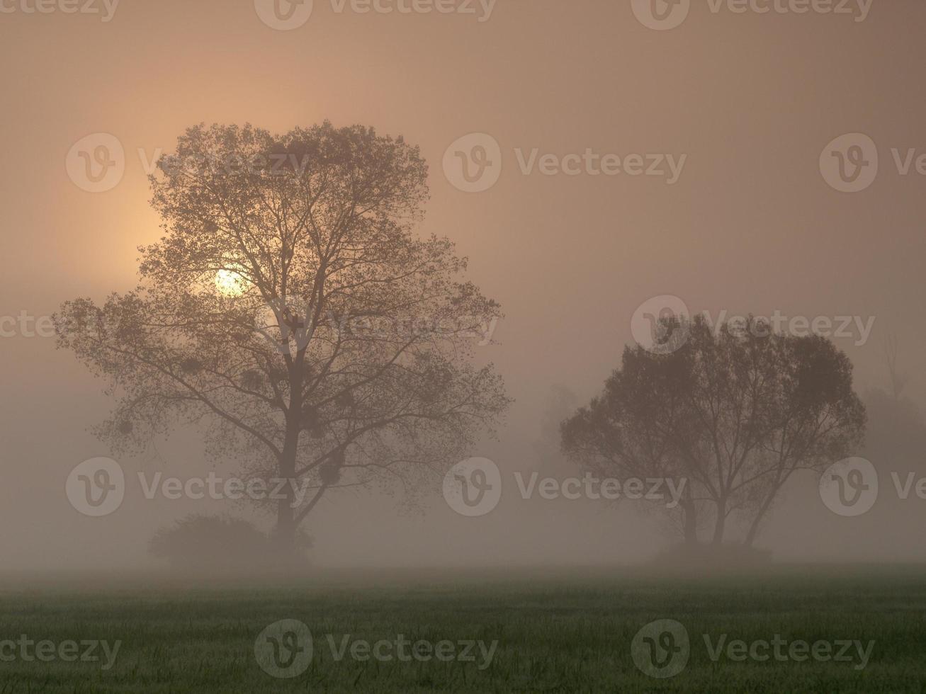 schöne neblige Sonnenaufgangslandschaft mit Bäumen foto