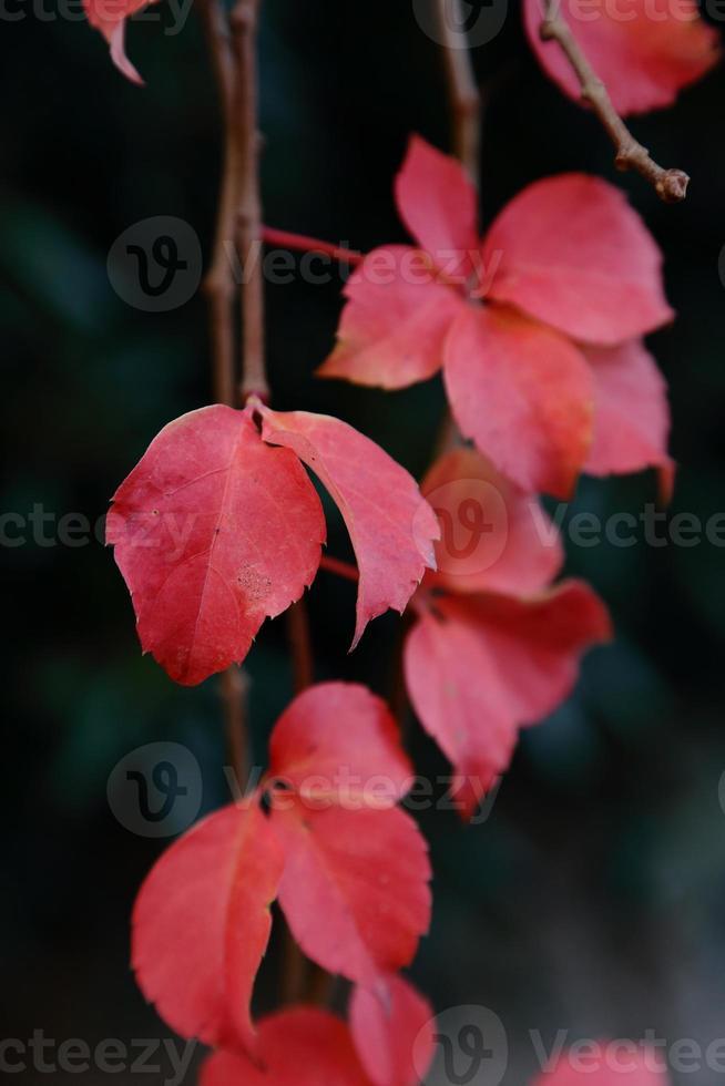 Blätter im Winter foto