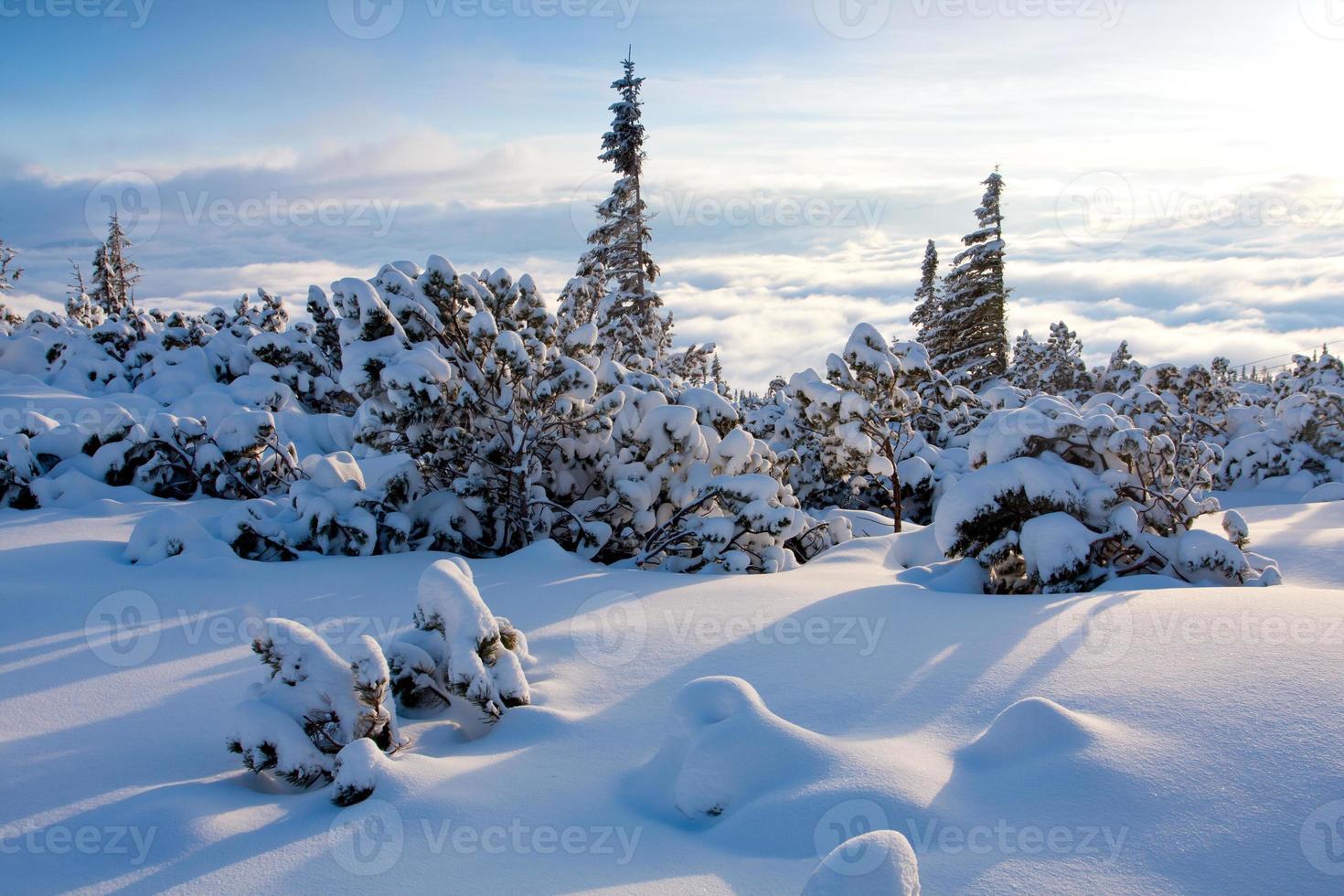 Winterszene in den Bergen foto