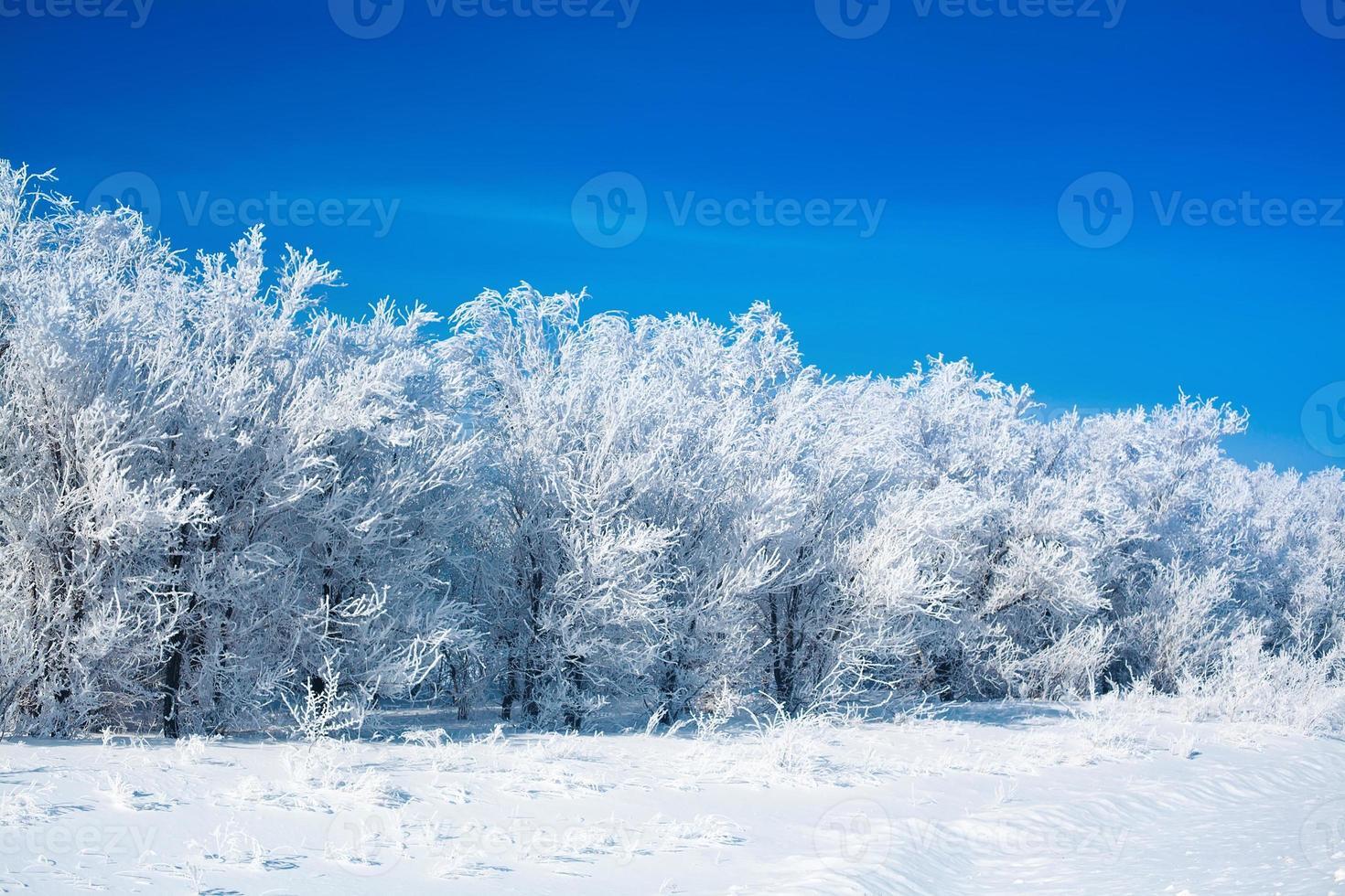schöner Winterwald foto