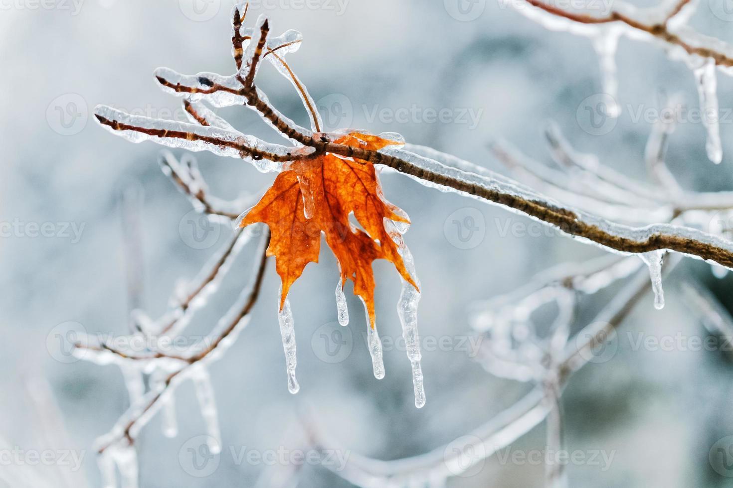 stille Wahl im Winter foto