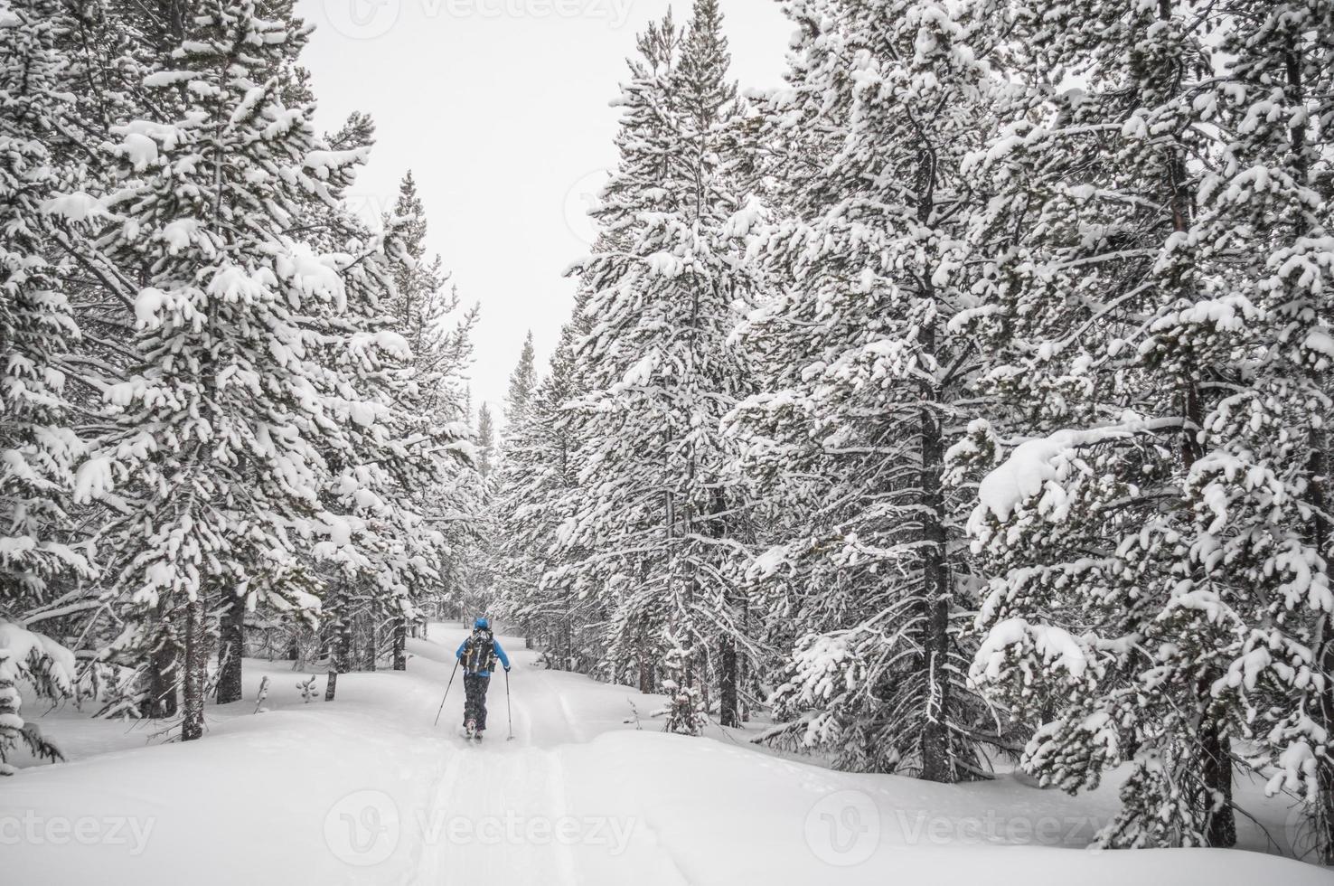 Skifahren im Winter foto