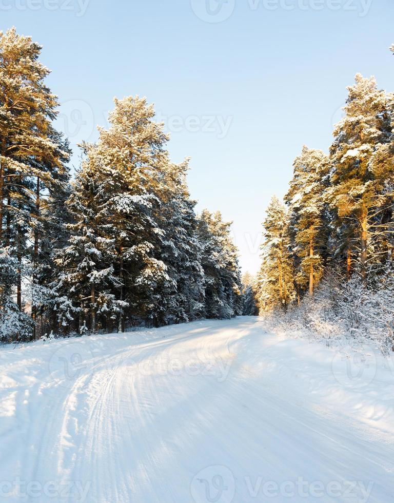 Winter und Bäume im Schnee foto