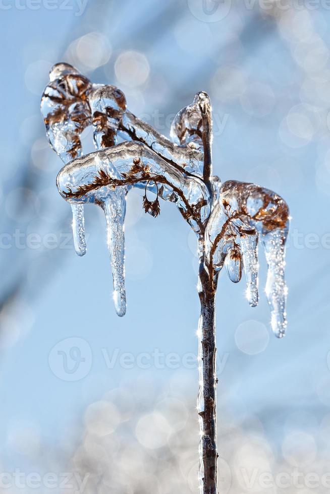 gefrorene Pflanze im Winter foto