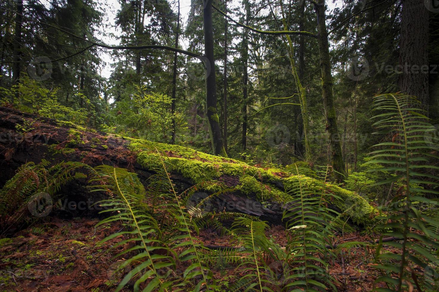 schöne pazifische Regenwaldszene foto