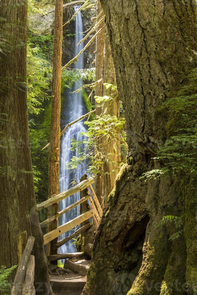 Marymere Falls und Trail foto