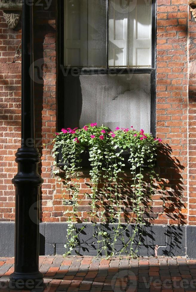 Boston Fensterbox foto
