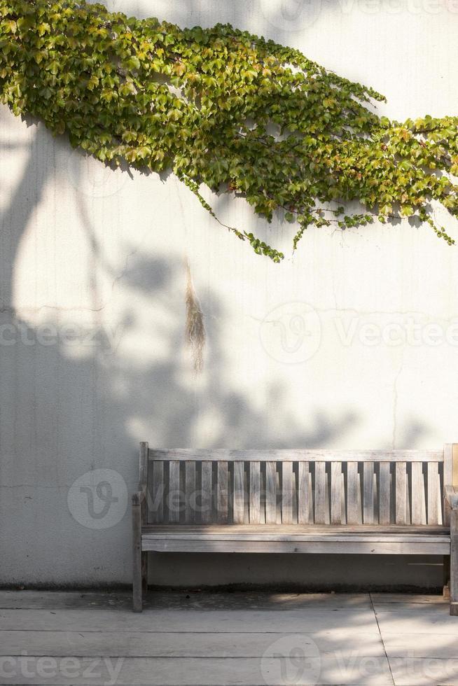 Bänke, Efeu, foto