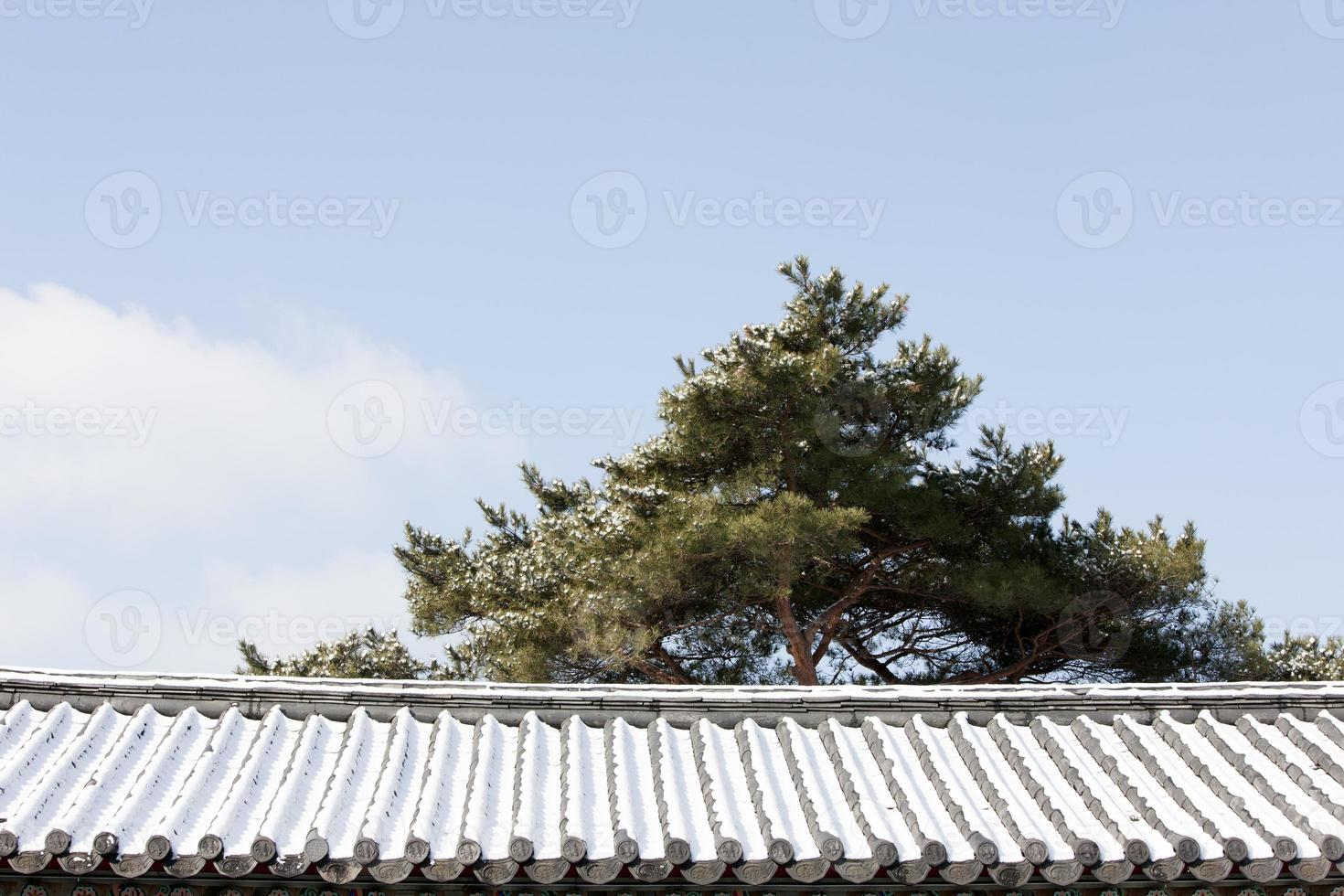 Dach; Schnee; Kiefer; foto