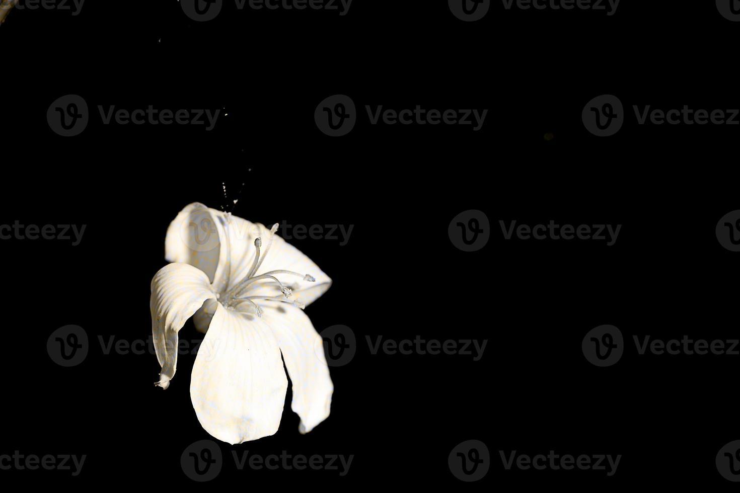 schöne Tung Blumen foto