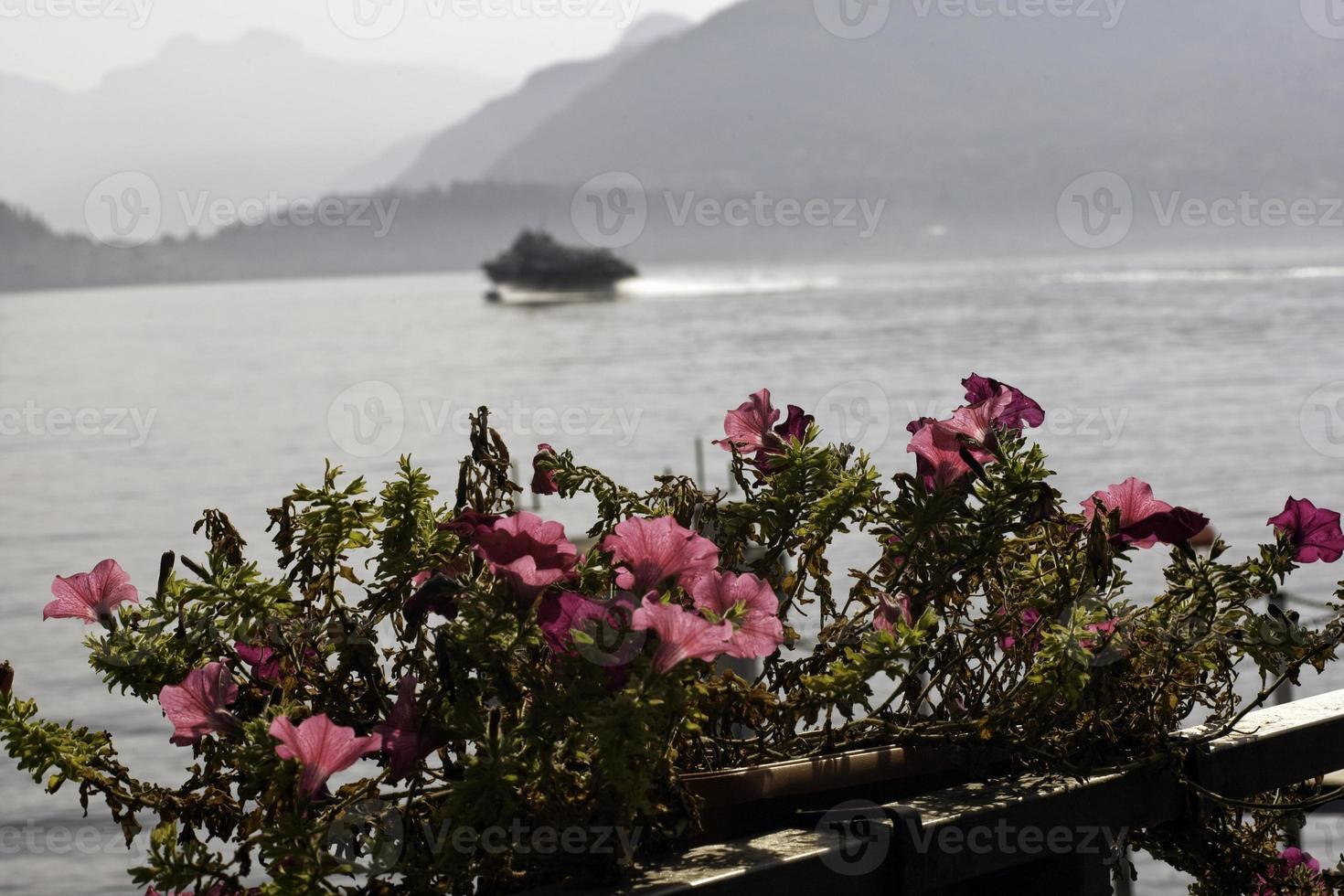 fiori e lago foto