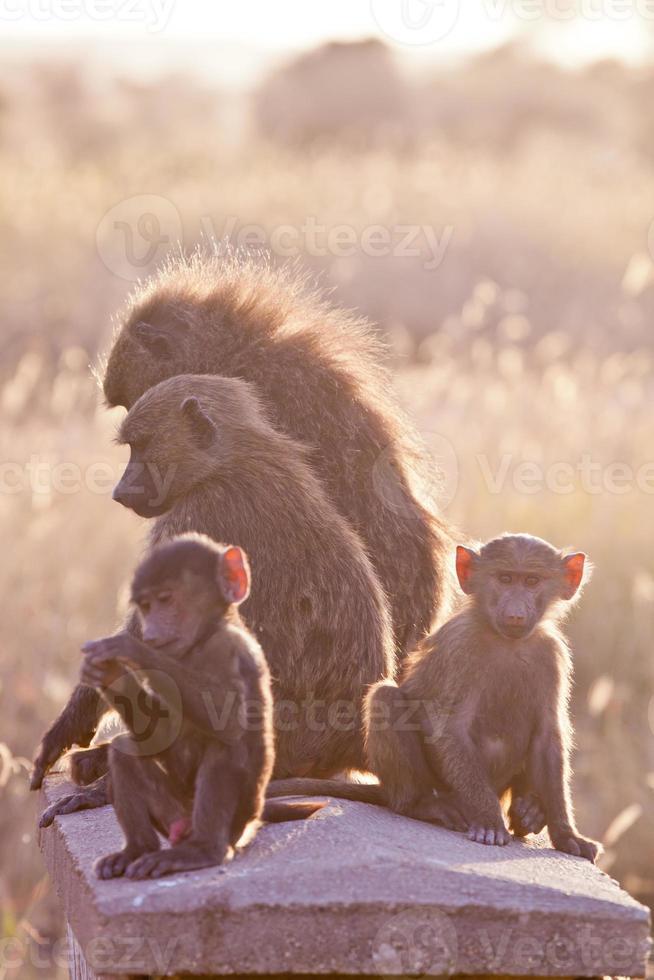 Babon Familie foto