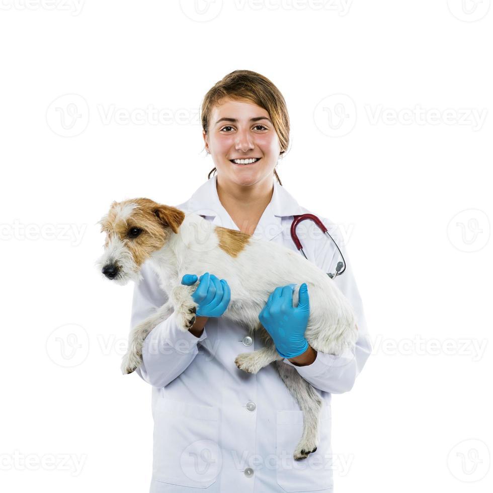 Tierärztin, die Hund isoliert untersucht foto