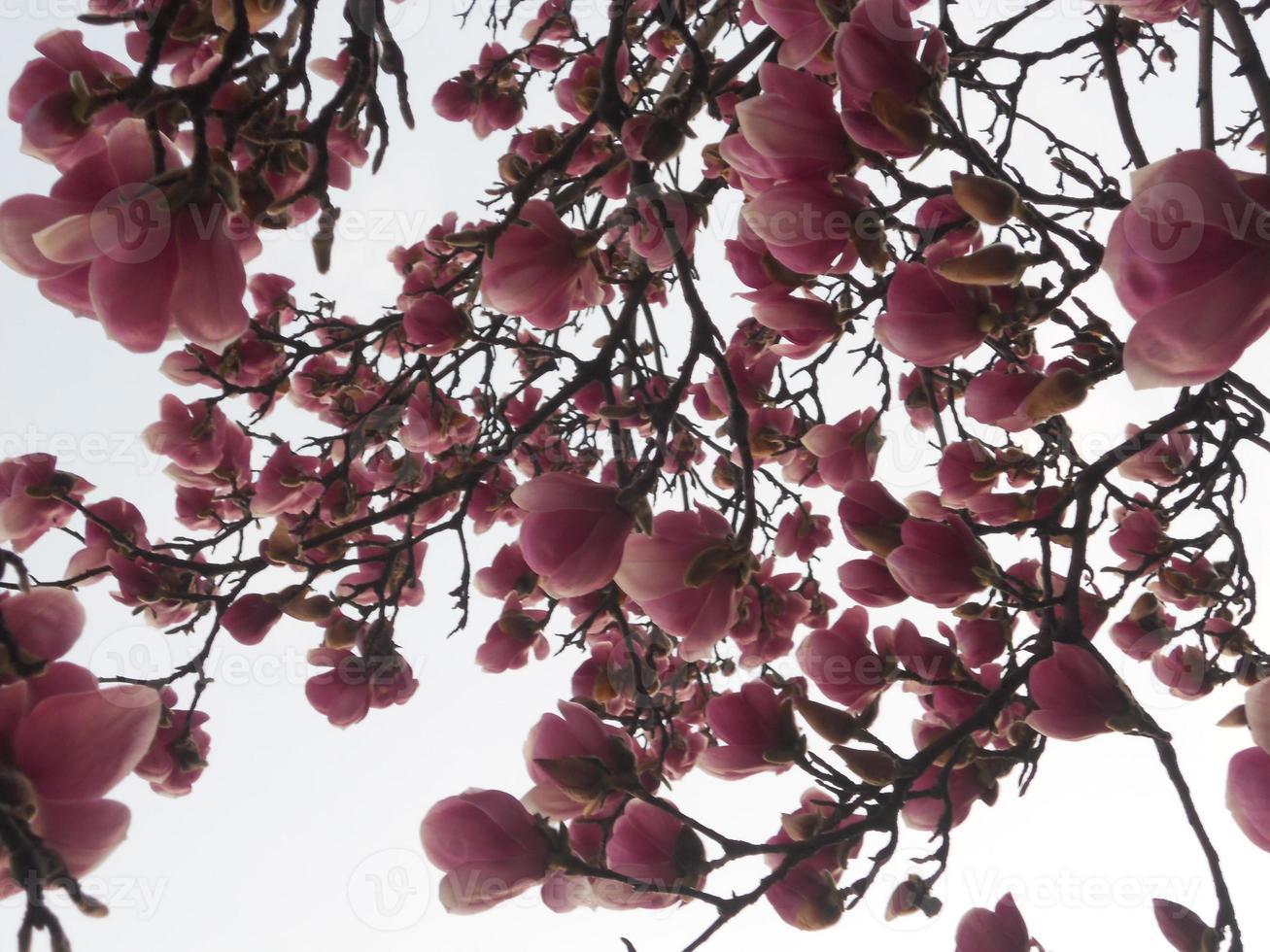 Baum in Blumen foto
