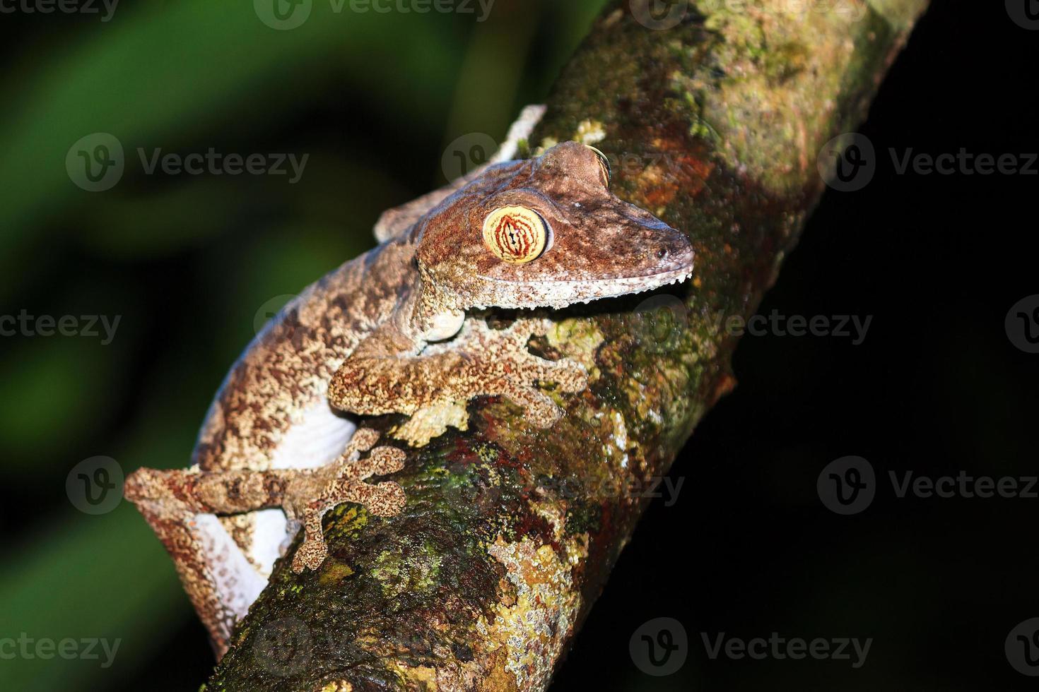 schöner Gecko foto