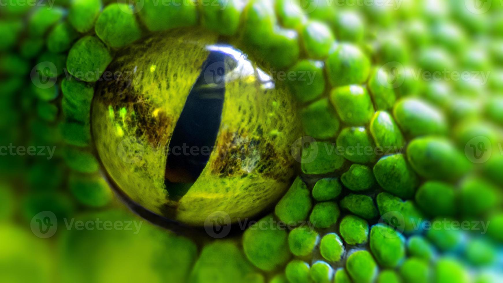 grüne Python (Morelia viridis). Nahaufnahme des Auges foto