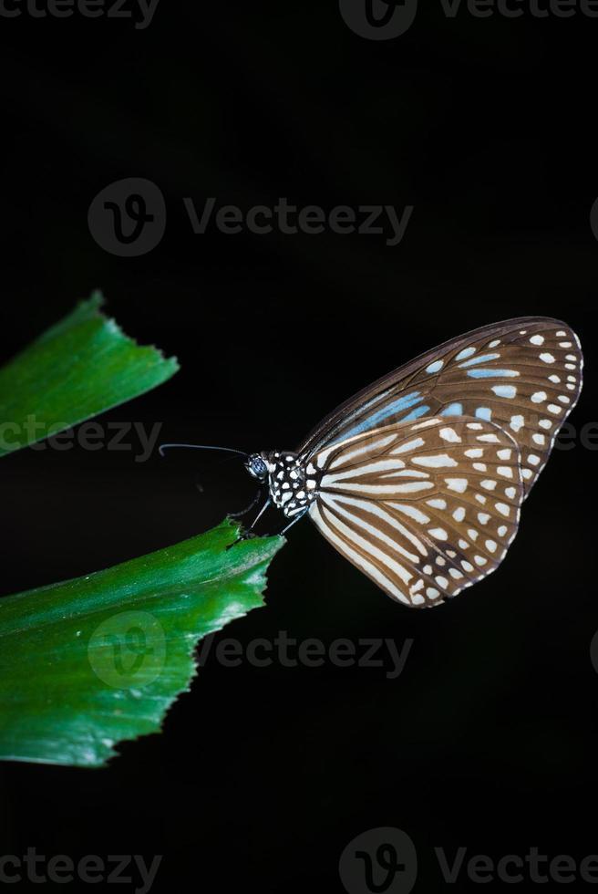 Nahaufnahme des Schmetterlings foto