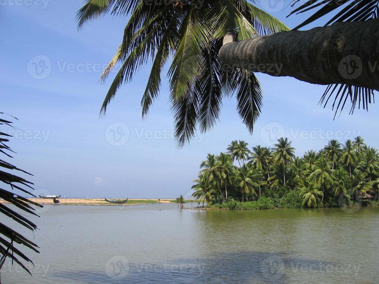 Kerala Backwaters und Kokospalmen foto