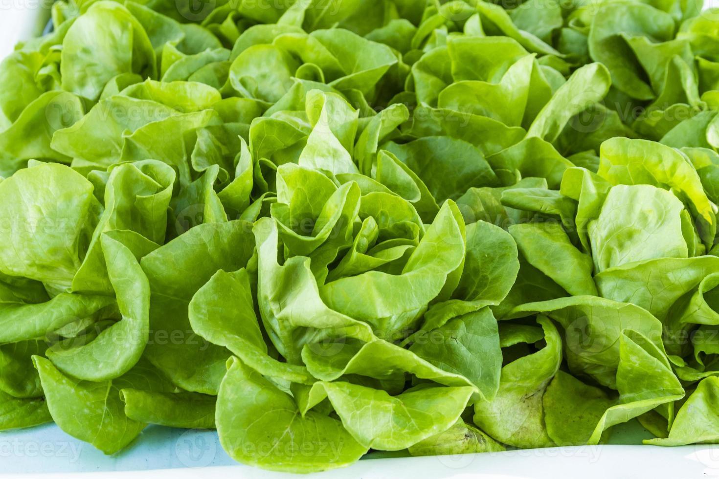 frisches Bio-Obst und Gemüse auf dem Bauernmarkt foto