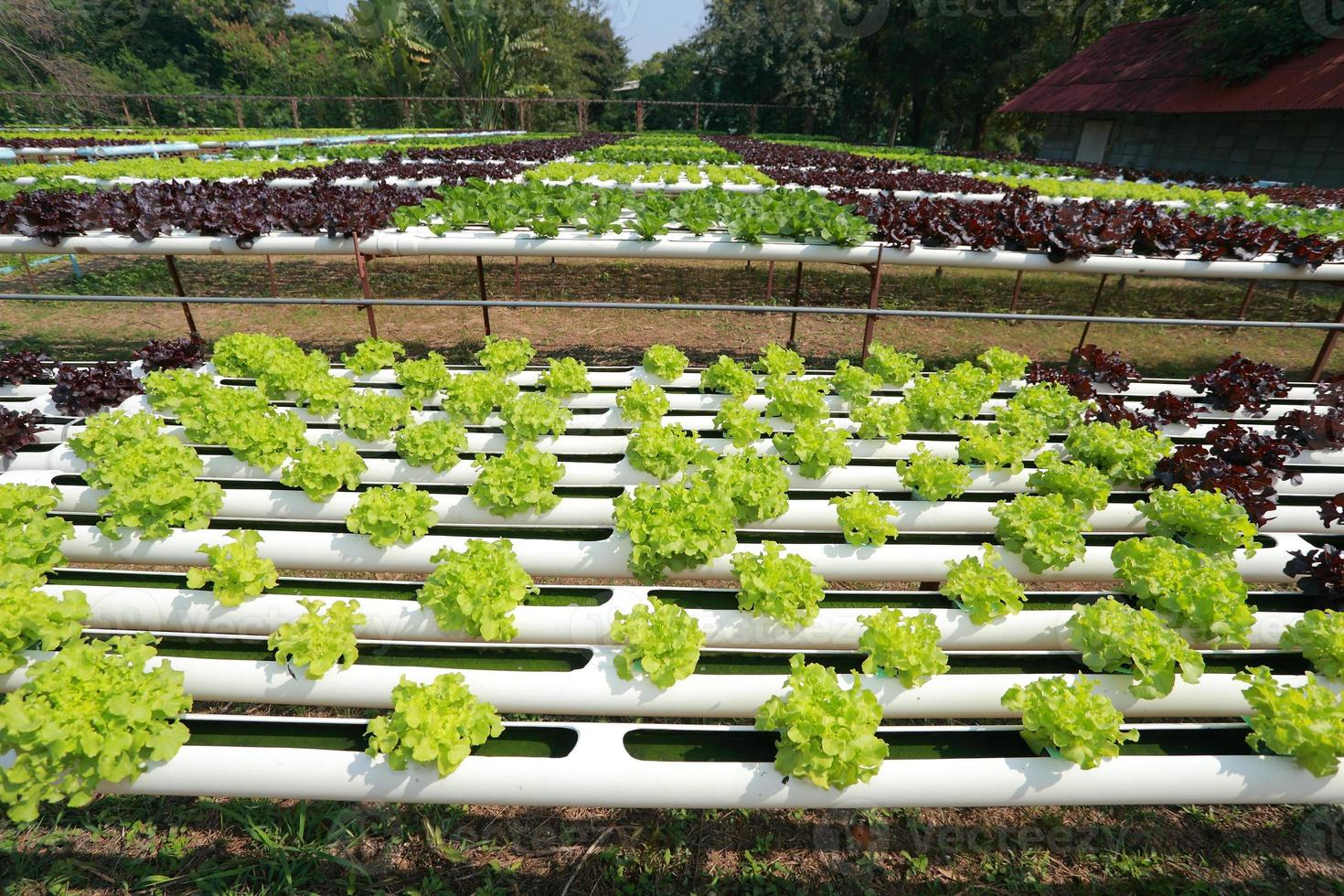 Bio-Hydrokultur-Gemüsebauernhof 38 foto