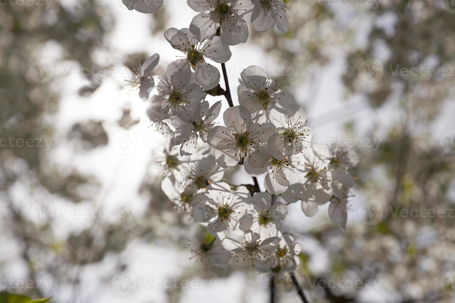 blühende Bäume foto