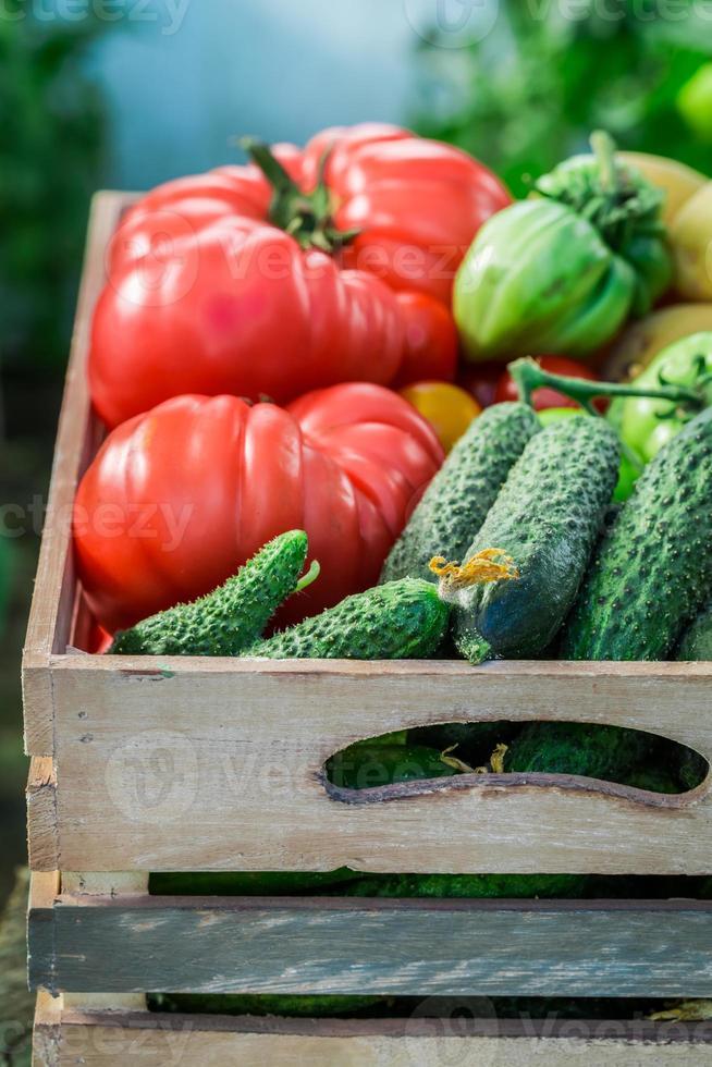geerntete Tomaten und Gurken im Gewächshaus foto