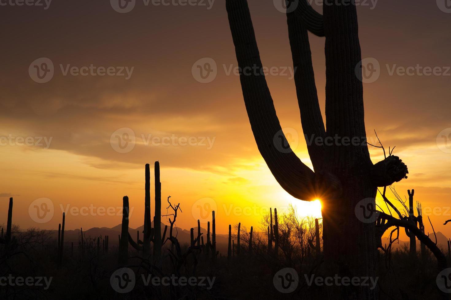 Sonnenuntergang über Saguaro np foto