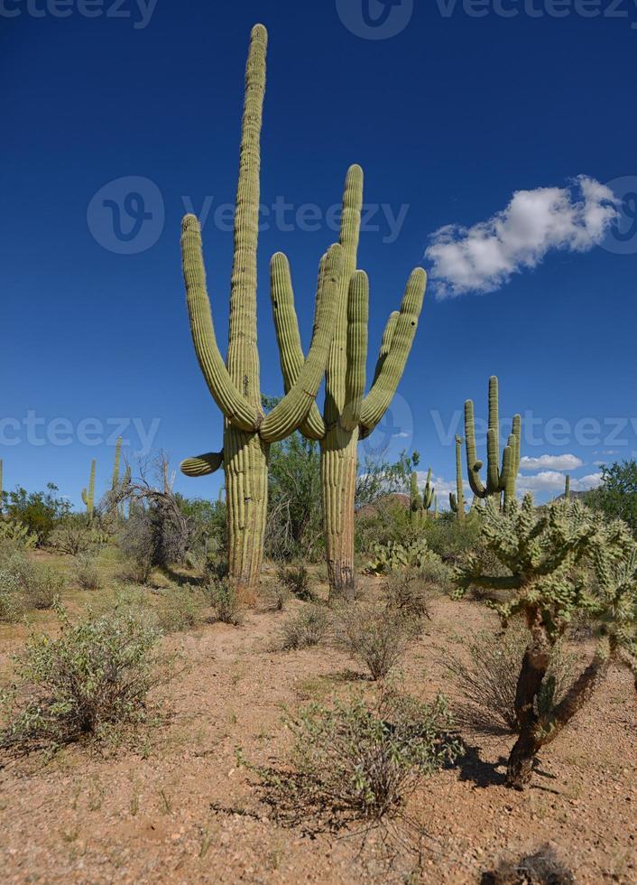 perfekter Tag in der Wüste foto