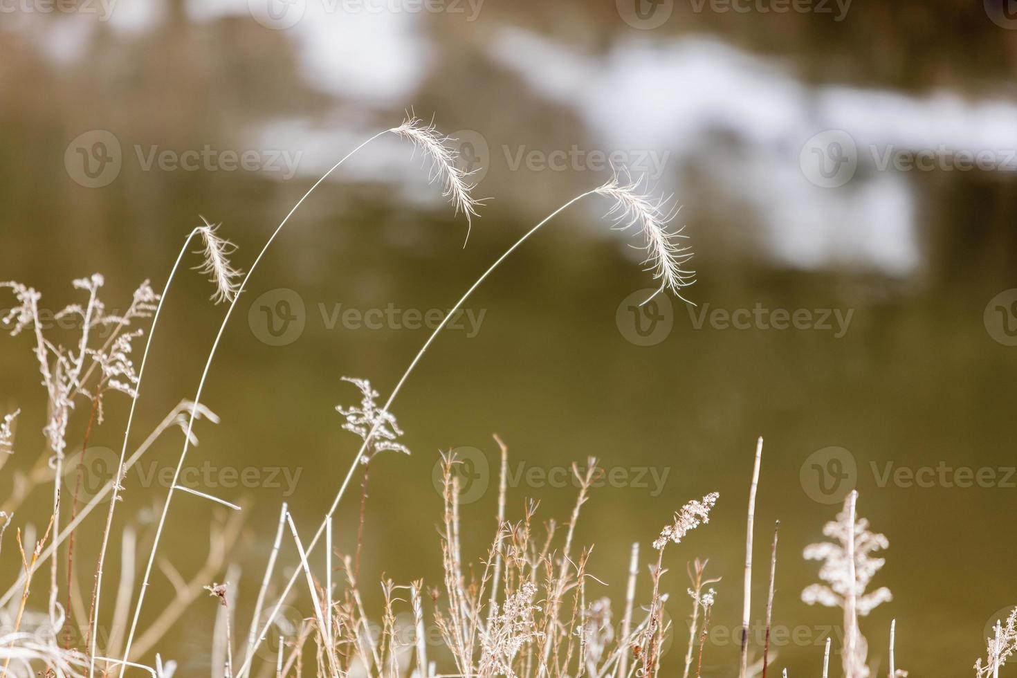 Michigan Gras foto