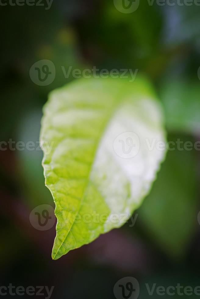 Frühlingsblätter foto