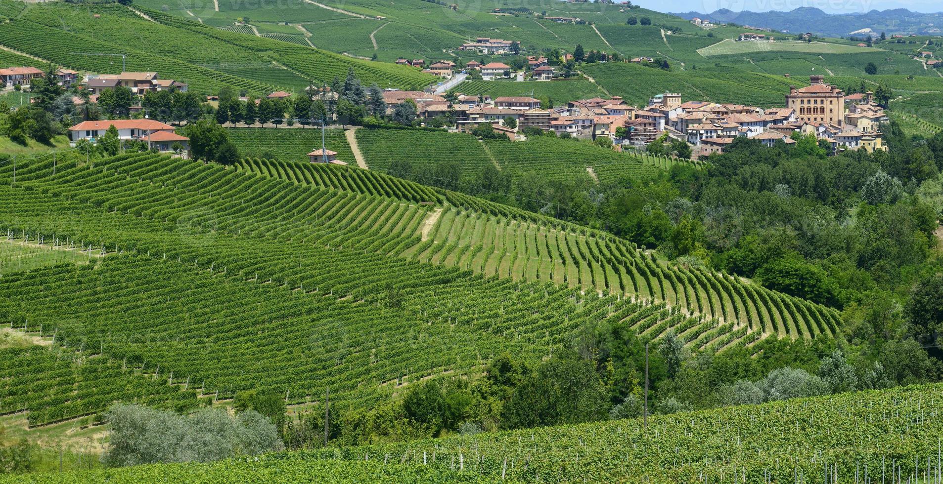 Sommerlandschaft in Langhe (Italien) foto