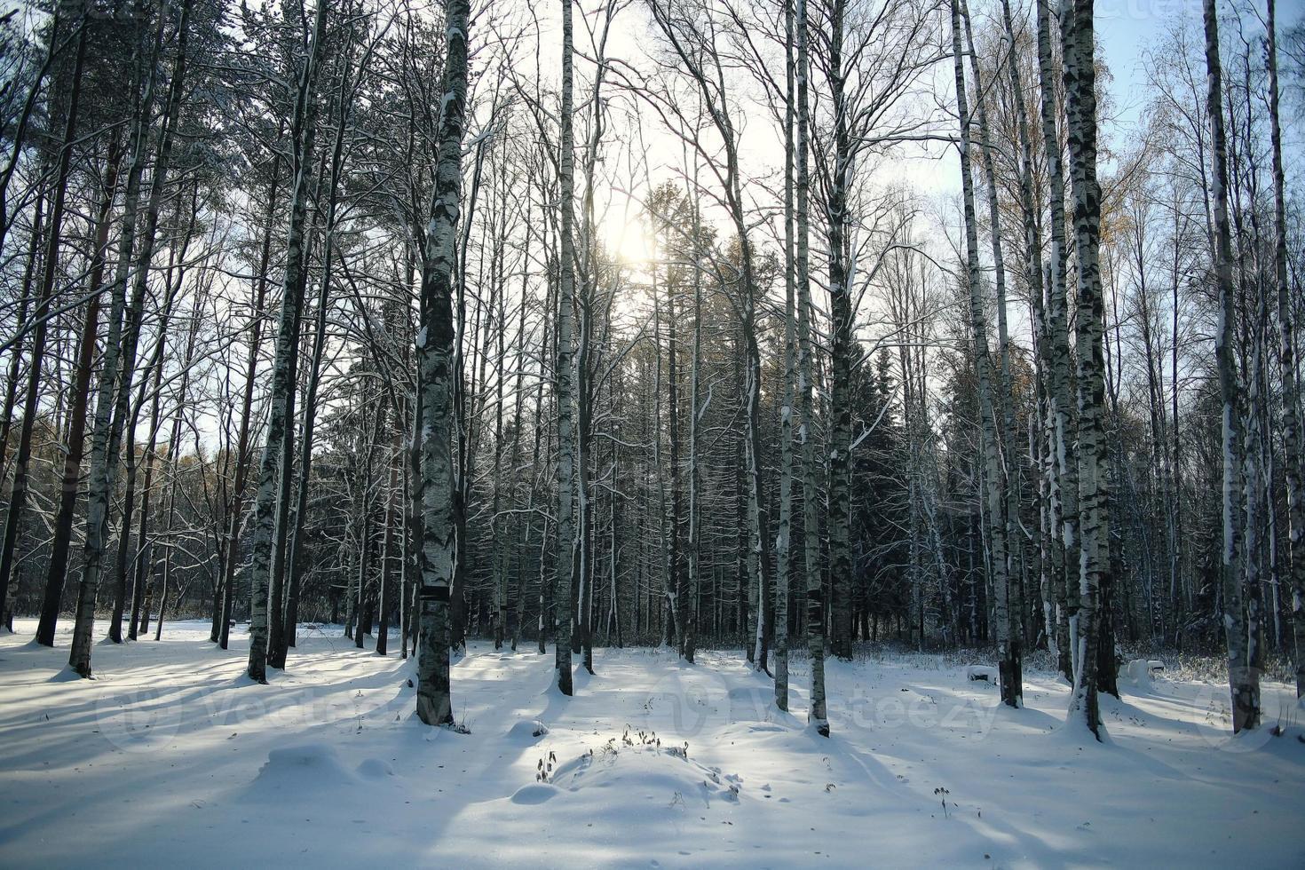 Landschaft Winter Schneewald foto