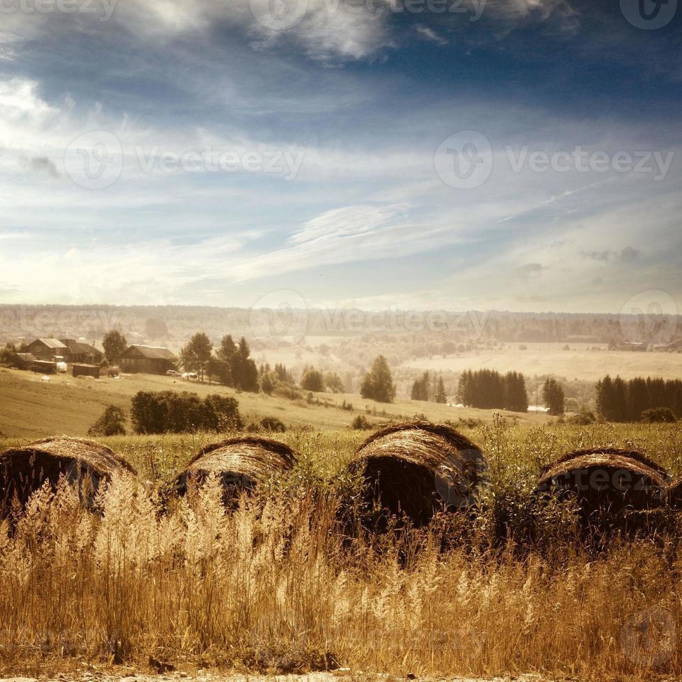 Sommerlandschaft auf dem Land foto