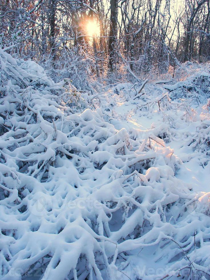 Allerton Park Winterlandschaft foto