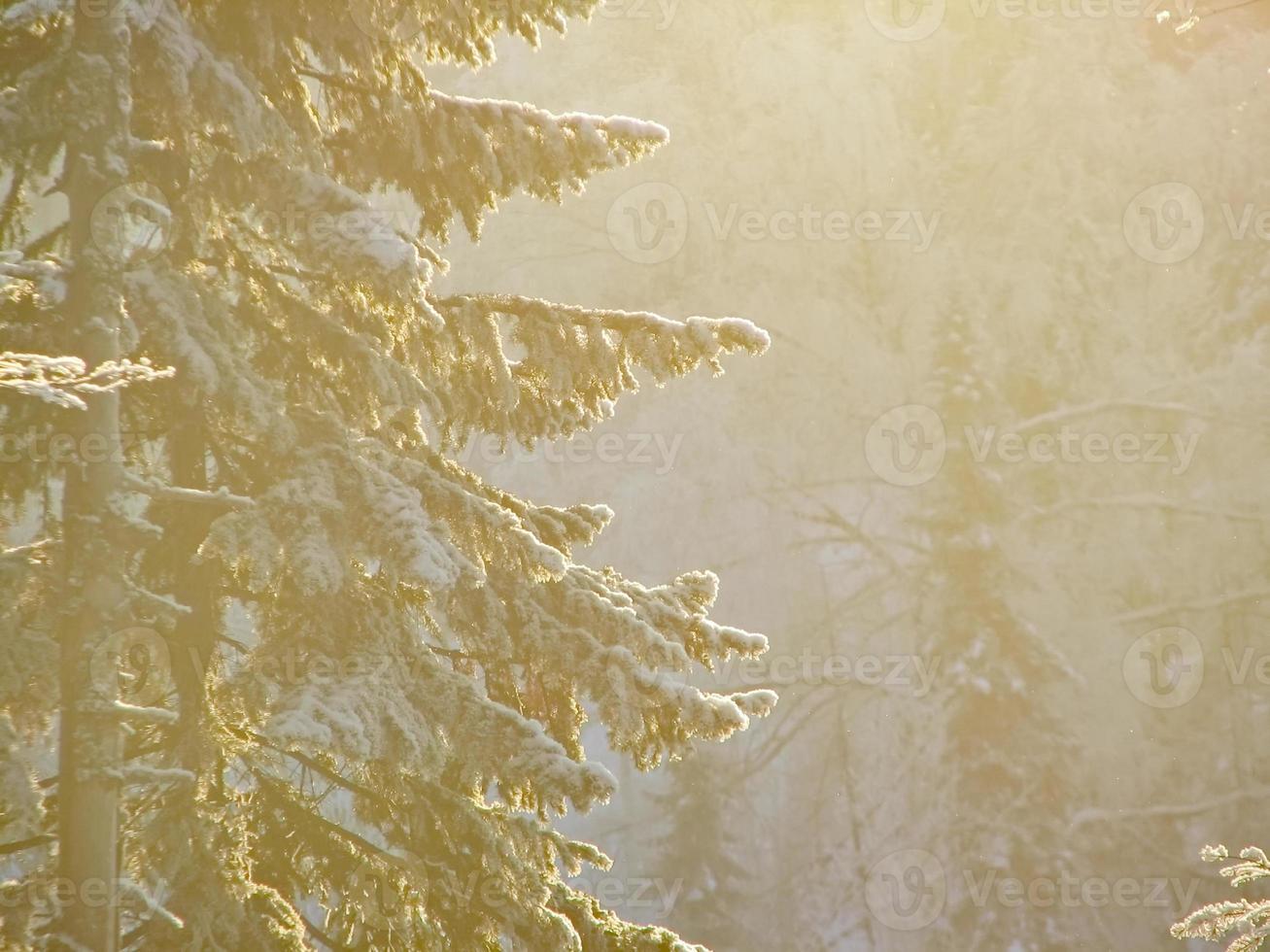 schneebedeckter Winterwald foto