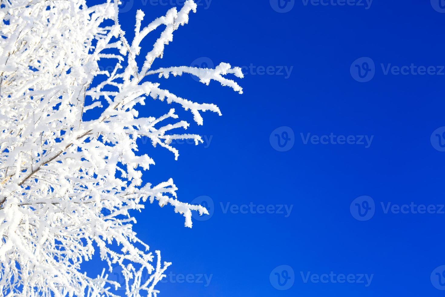 Winterbäume auf blauem Himmel foto