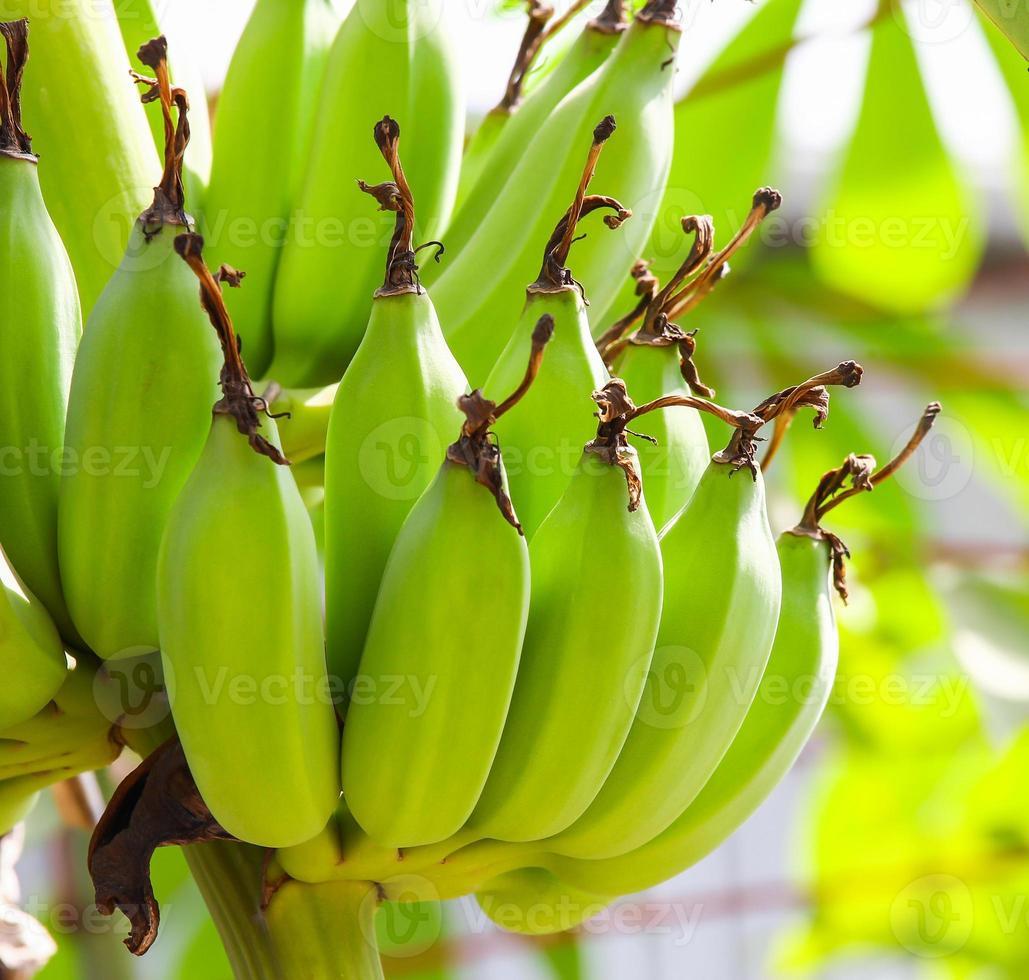 rohe Banane foto
