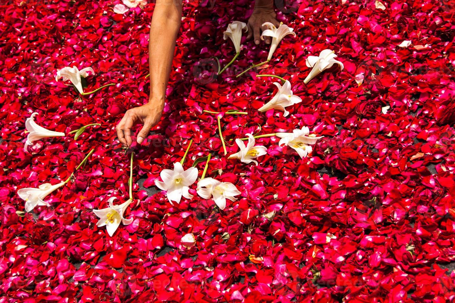 Karwoche Teppich aus Rosenblättern, Antigua, Guatemala machen foto