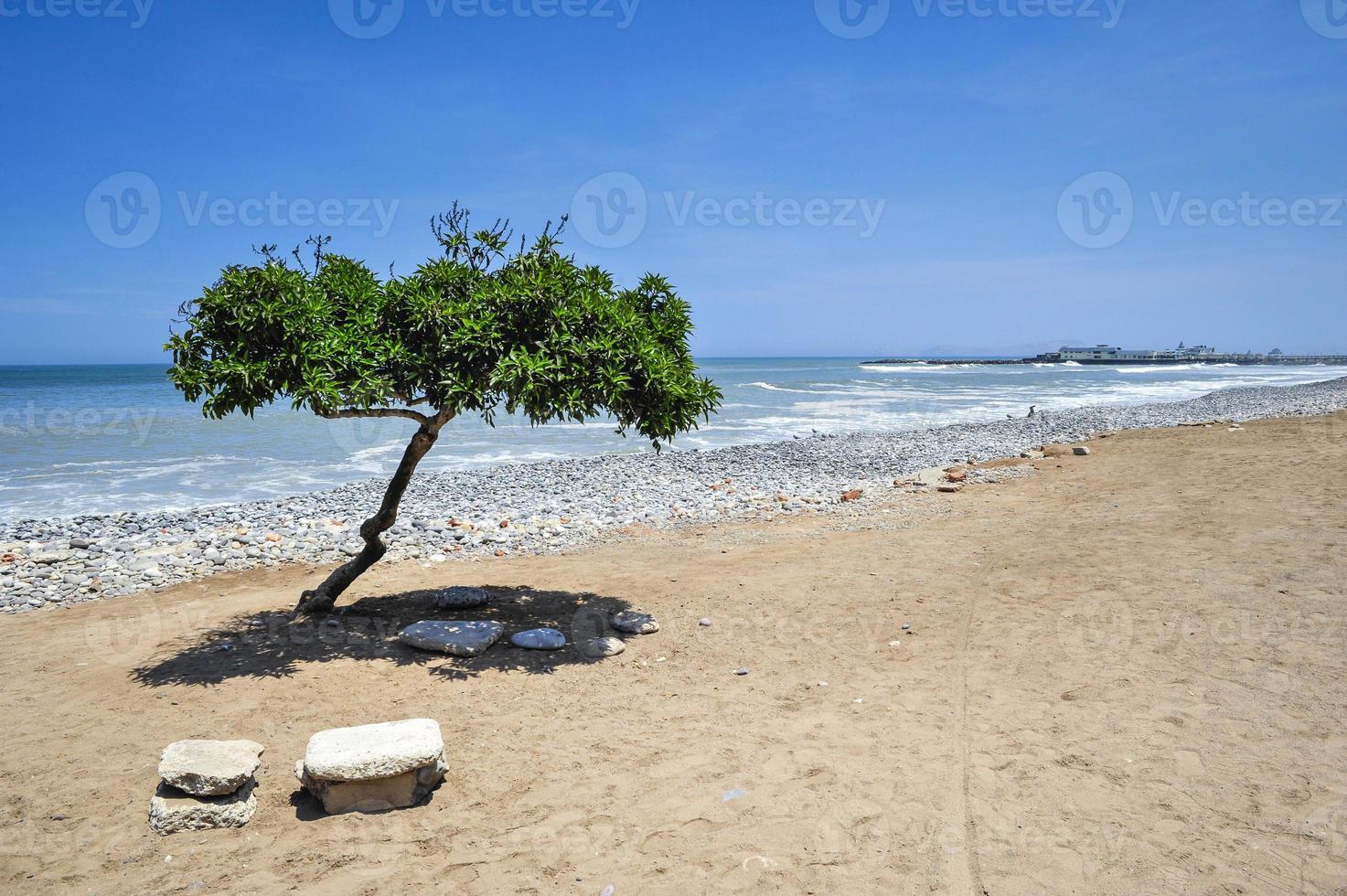 einsamer Baum am Strand foto