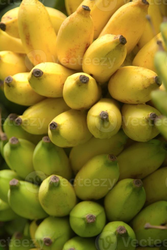 Bündel Bananen isoliert foto