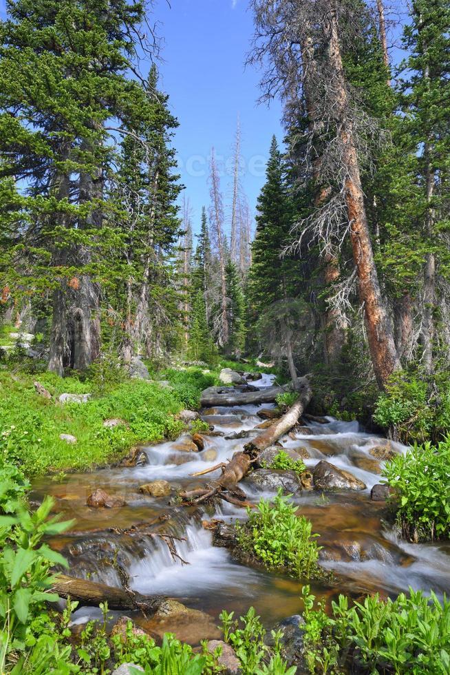 Gebirgsbach in der Wildnis von Colorado im Sommer foto