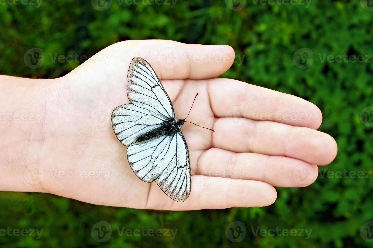 weißer Schmetterling auf der Hand des Kindes foto